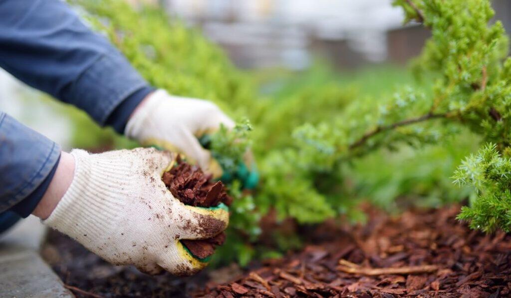Adding Mulch on Garden