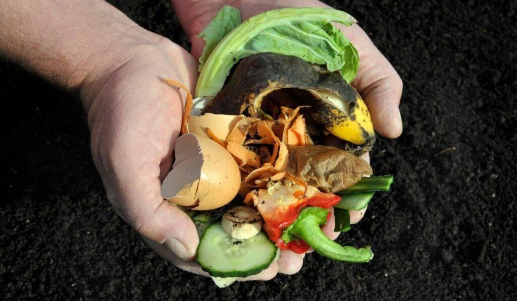 Compost Soil Amendment