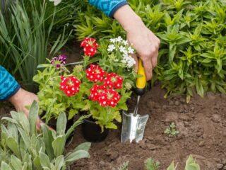 In-Ground-Garden-Beds