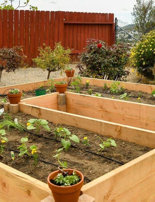 Raised-Bed-Garden-1