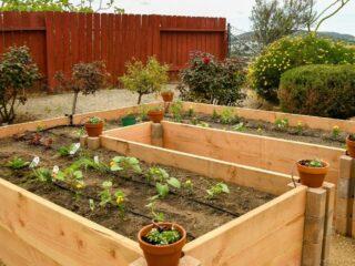 Raised-Bed-Garden-2