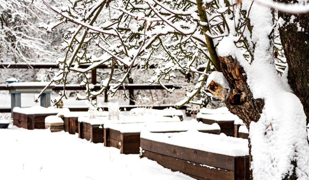 Raised Bed Garden During Winter