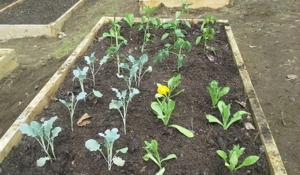 Raised Bed Garden Plants