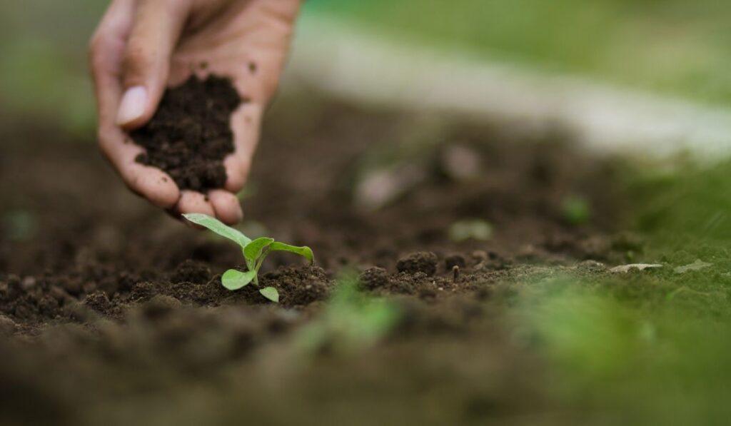 Raised Bed Garden Soil