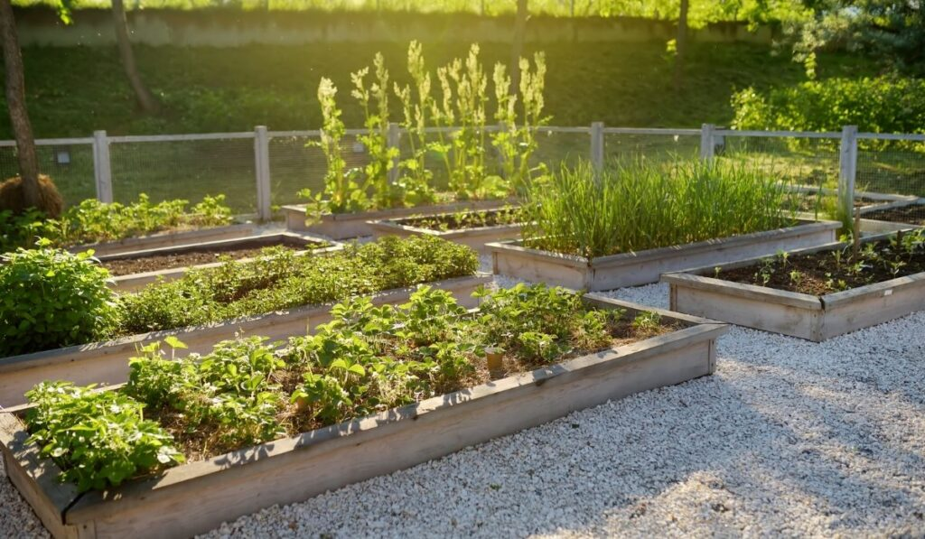 Raised Bed Garden With Plants