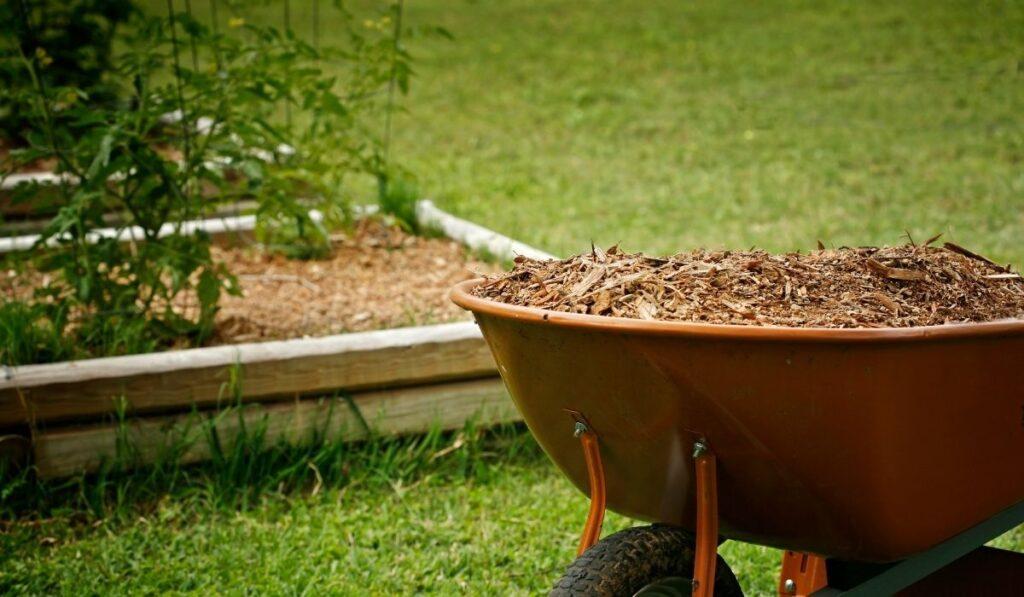 Raised-Bed-Garden-and-Garden-Mulch