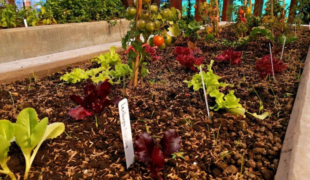 Raised Bed Organinc Garden