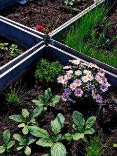 Raised-Bed-Perennial-Plants