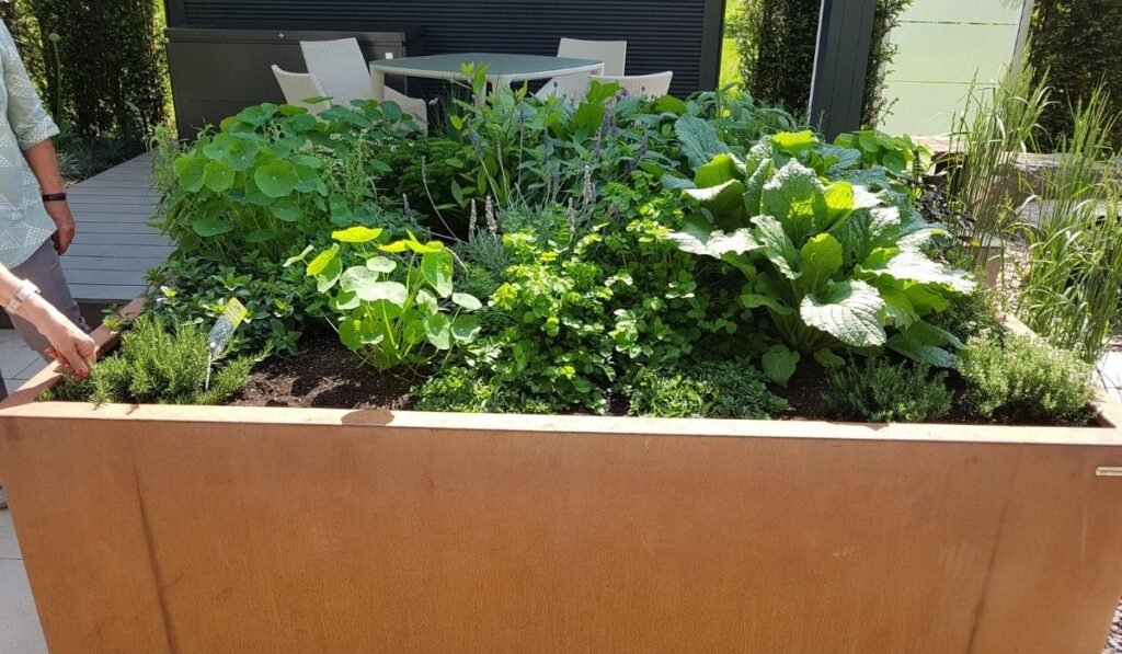 Raised Beds with Composite Lumber