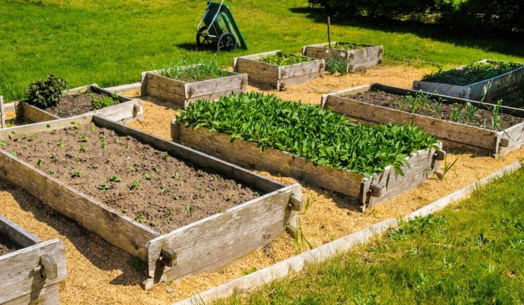 Raised Garden Bed Advantages and Disadvantages