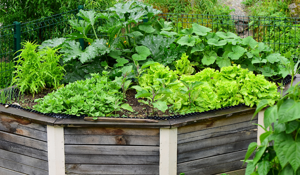 Garden Beds in triangular shape made form wood planted with vegetable