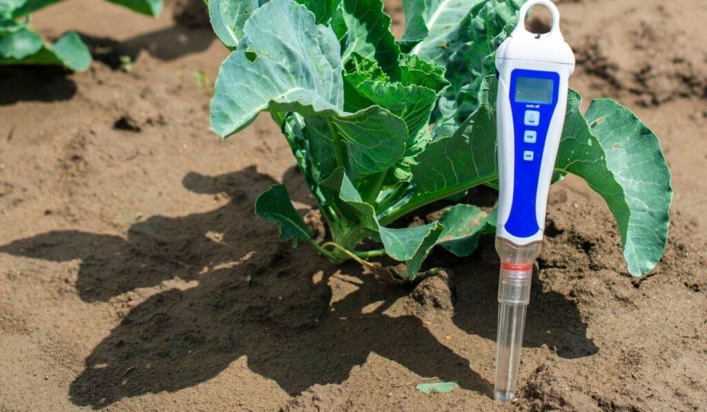 ph meter device pricked in soil