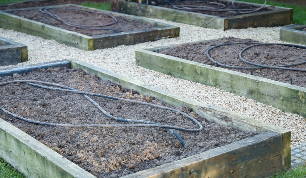 raised beds with soaker hose