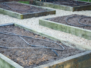 raised-beds-with-soaker-hose