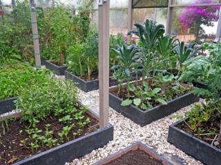 Raised-Bed-Garden