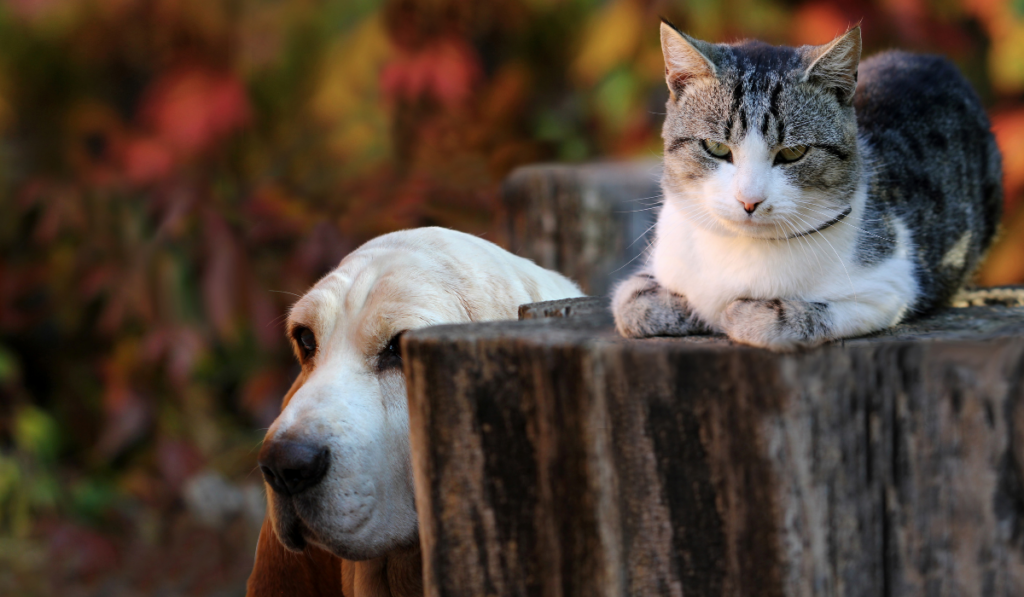Dog sitting near the cat who is on top of an old chopped tree.