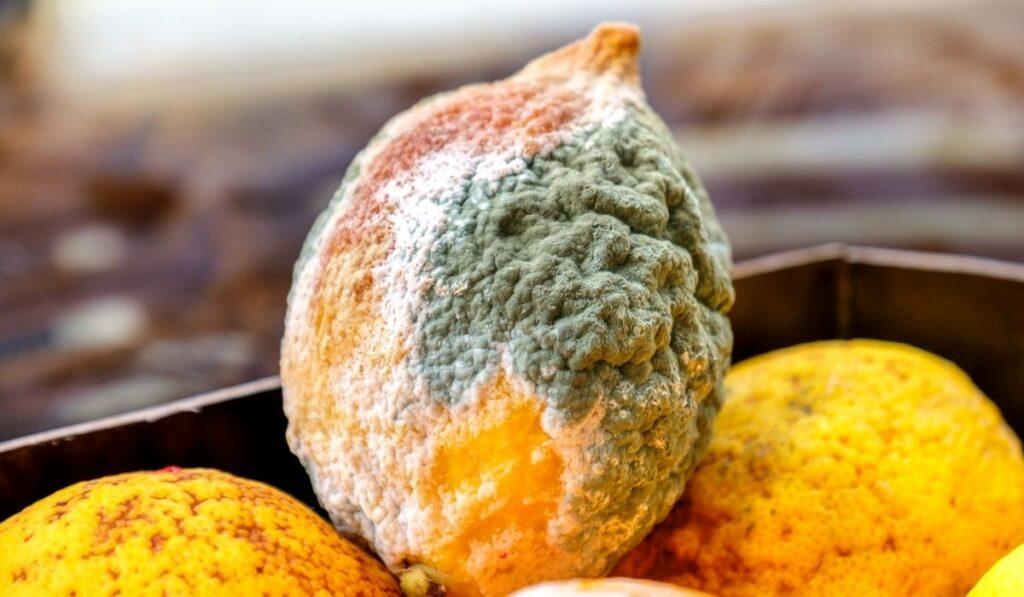 lemon with molds