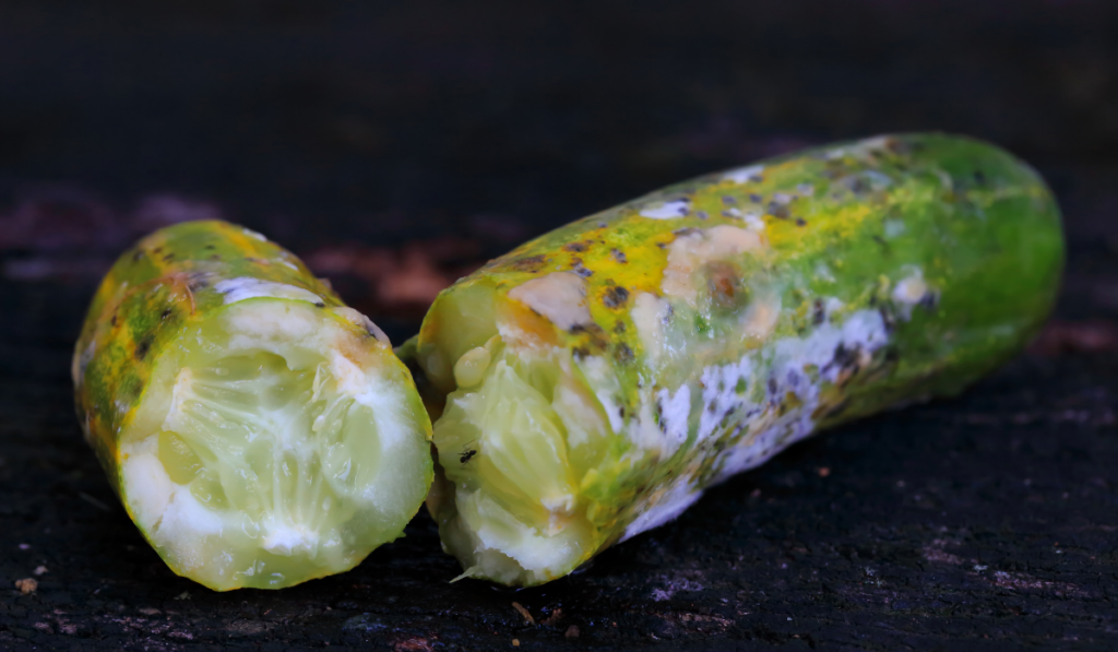 moldy-cucumber