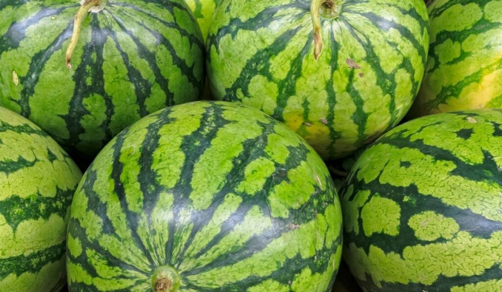 whole watermelons