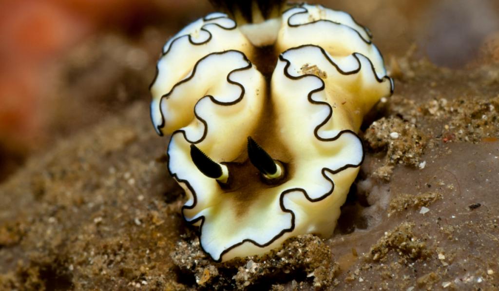 A black and white slug on a muddy ground